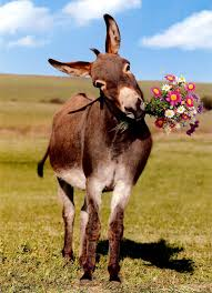 happy-donkey